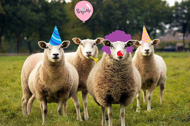 PartyMe овце
